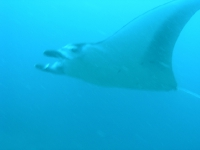 Onder water_2